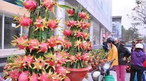 盆栽火龙果的修剪技巧- 花百科