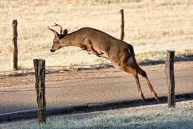 Deer Fencing Tips To Protect Wildlife And Gardens Countryside