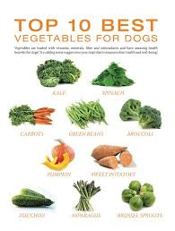should know about homemade dog food