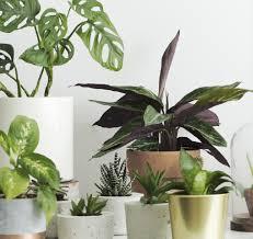 catalogo de plantas de interior