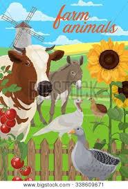 Farm Animals Vector Photo Free Trial Bigstock