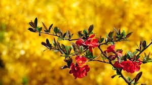 flowers wallpaper hd for desktop 32