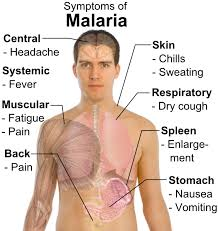 Malaria Part 3: The disease - Infection Landscapes