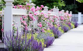 flower garden backgrounds 47 pictures