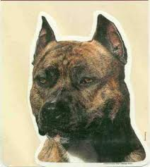 Car Window Decal Pitbull Brindle Dog Decal 2 Sided Dog Gone It Gifts