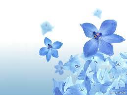 خلفيات ورد اجمل اشكال الورود بالصور صور جميلة