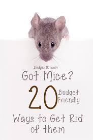 20 ways to get rid of mice homemade