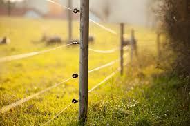 Best Apiary Electric Fence For Bears 2020 Beekeepclub