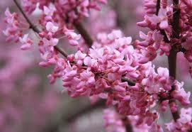 اروع زهور خيالية شوف وخليك بين الطبيعة والخيال في عالم الورود