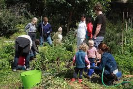 community gardens help and even hurt