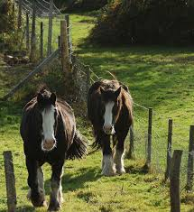 Building A Farm Horse Fence Hobby Farms