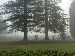 Sarah and Duane: Foster Bay and Waikumete Cemetery – the chasing fog club  (Est. 2014)