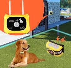 Best Wireless Dog Fences In 2020 Your Dog Lover