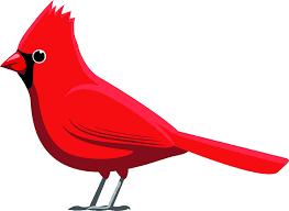 Amazon Com Beautiful Regal Red Cardinal Bird Cartoon Art Vinyl Sticker 2 Wide Standing Kitchen Dining