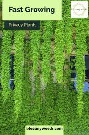 50 Privacy Plants Ideas In 2020 Privacy Plants Backyard Privacy Backyard