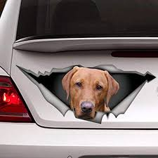 Amazon Com Red Labrador Decal Pet Decal Lab Decal Dog Decal Red Fox Lab Car Decal Vinyl Sticker For Cars Windows Walls Fridge Toilet And More 6 Inch Kitchen Dining