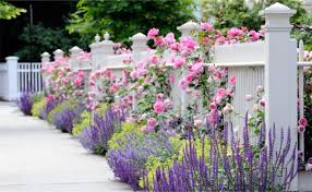 the fence line fence landscaping ideas
