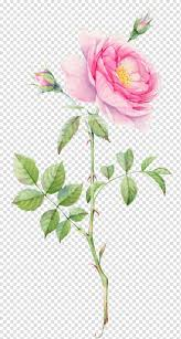 جميلة ألوان مائية مرسومة باليد الزهور Png