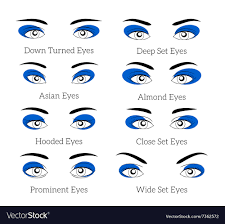 eyes royalty free vector image