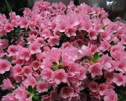 I fiori da regalare alla vostra mamma