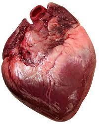enzimas cardÍacas ck ck mb el
