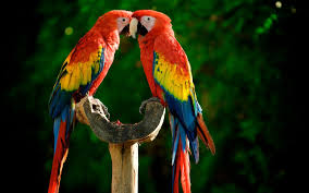 macaw wallpapers top free macaw