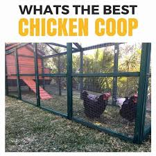 Keeping Chickens The Ultimate Beginners Guide For The Australian Backyard