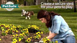 Petsafe Basic In Ground Fence Youtube