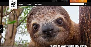 wwf endangered species conservation