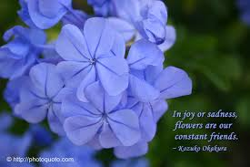 quotes about friendship and plants facebook quotes for friends