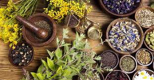 A Floresta - Ervas e raízes medicinais