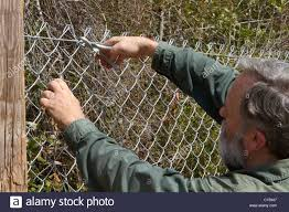Man Attaches Hog Ring To Chain Link Fence During Installation Stock Photo Alamy
