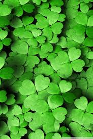 four leaf clover wallpapers h5rxe3k