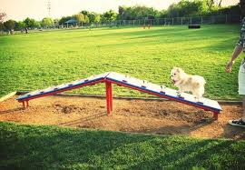 10 Cutest Backyard Dog Run Ideas Designs Megagrass
