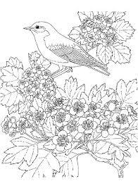 Vogels Kleurplaat Met Afbeeldingen Kleurplaten Bloem