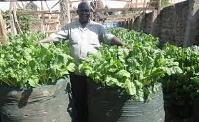 urban spinach farmer makes sh100 000 in