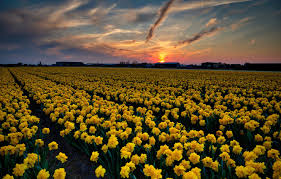 sky sunset flowers