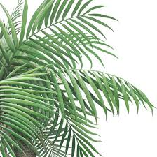Palm Tree Wall Decal Jungle Wall Decals Hand Painted Designs