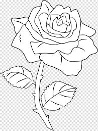 فن الخط رسم كتاب تلوين الورود الورود بالأبيض والأسود ق Png