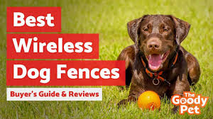 4 Best Wireless Dog Fences November 2020 Reviews The Goody Pet