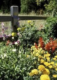 no maintenance flower bed ideas home