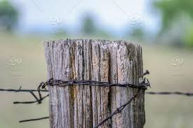 Old Wood Fence Post Wrapped In Barbed Wire On Farm Stock Photo Ed6bba5d Bfea 44d9 Bd97 269e27d51465