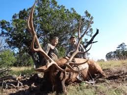 Elk Hunting For Trophy Bulls In New Mexico Loh Outfitters