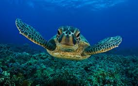 turtle backgrounds on hipwallpaper