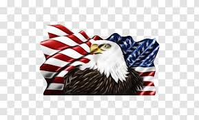 Bald Eagle Window Decal Sticker Car Accipitridae Native Visions Flying Transparencies Transparent Png