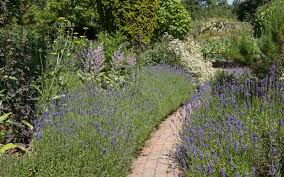 10 must have english garden plants