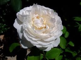 اروع ورد اروع وردة نقي واختار ولا تحتار بين الزهور الجميلة دي
