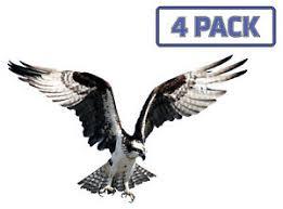 Osprey Eagle Hawk Birds Of Prey Sticker Vinyl Decal 1 016 Ebay