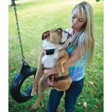Petsafe Stubborn Dog In Ground Fence By Petsafe At Fleet Farm