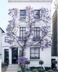 Magnifique Wisteria poussant sur la façade d'une maison à South Kensington  (Londres) (avec images) | Décoration maison, Décoration chambre, Home and  deco